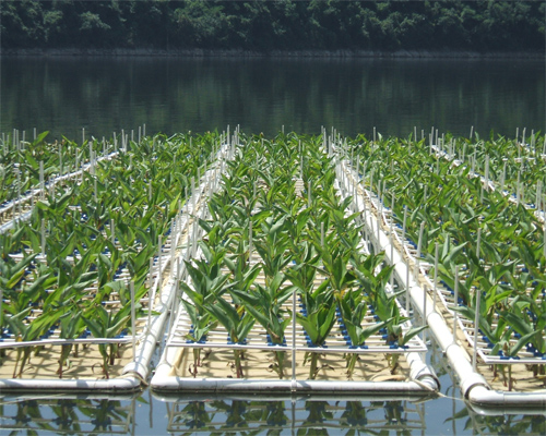西南地区最大的水源地生态浮床示范工程
