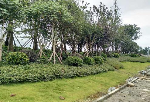 双龙航空港经济区龙洞堡景观提升项目